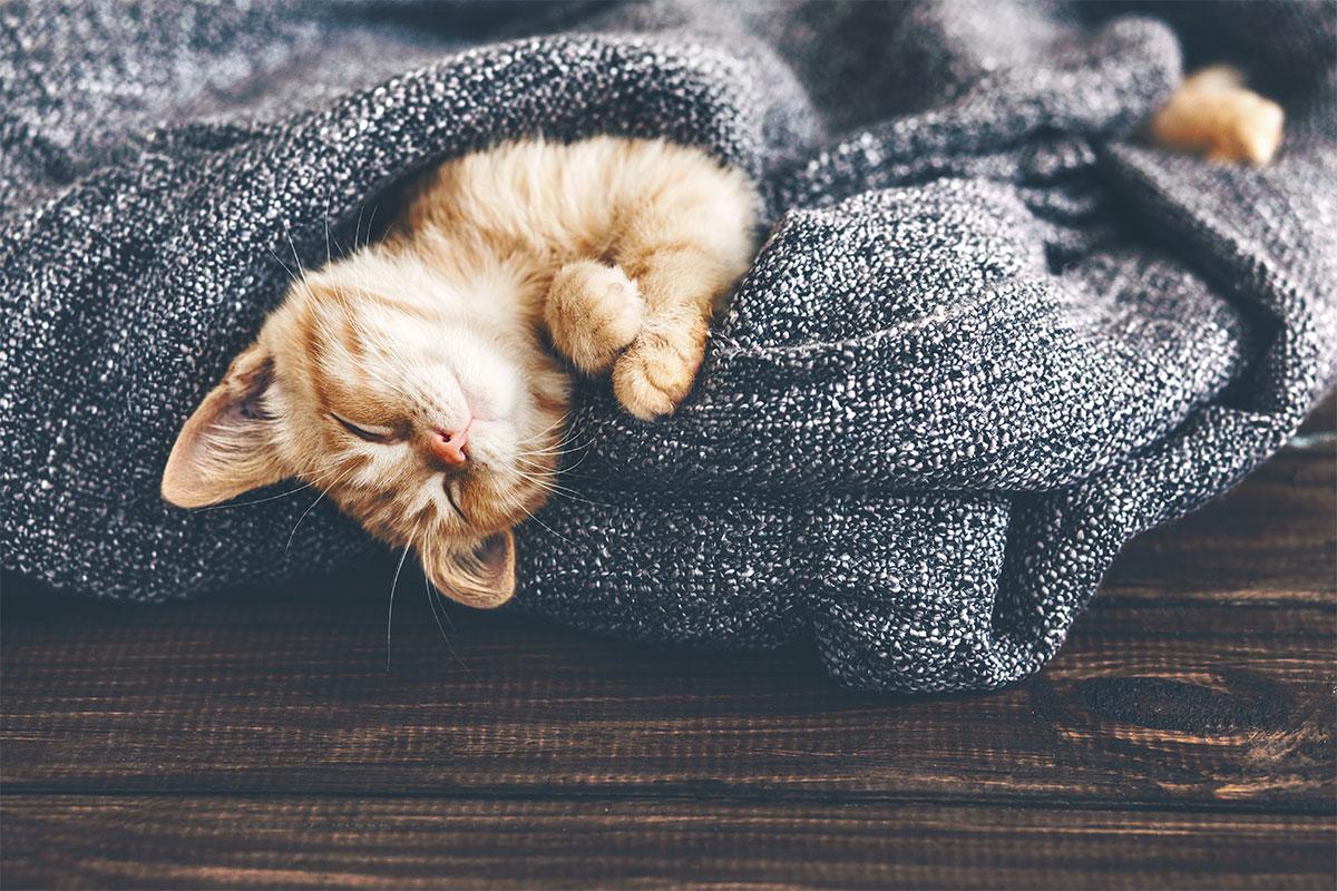 blog-post-sleeping